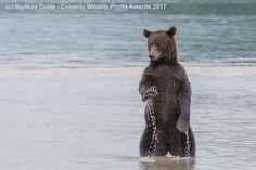 Los Comedy Wildlife Photography Awards premian las imágenes de animales más divertidas del año.