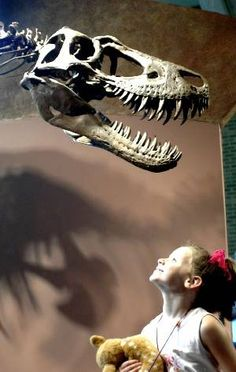 Cleveland Museum of Natural History - Positively Cleveland