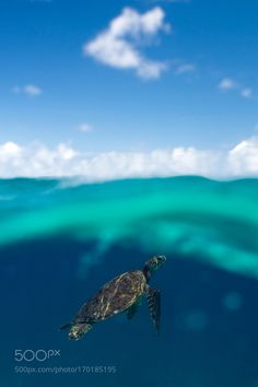 Shades of Blue & Green by slaterd #nature #photooftheday #amazing #picoftheday #sea #underwater
