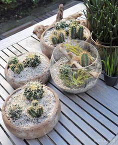 Urban Jungle Bloggers | Plant Still Life - Desert | STIJLIDEE Interieuradvies en Styling