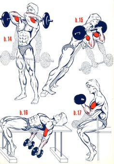 shoulder musculation - Buscar con Google