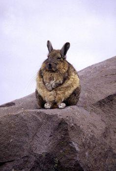 Wise bunny meditates