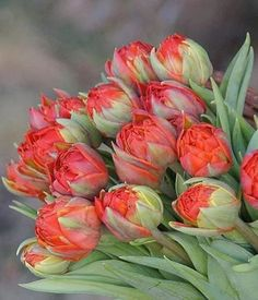A bouquet of matching unopened Tulips. Tulips Flowers, Botanical Flowers, Orange Flowers, Colorful Flowers, Spring Flowers, Planting Flowers, Beautiful Flowers, Corporate Flowers, Inside Plants
