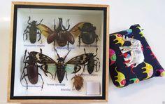 Insectos insectos mezclados grandes en caja por thaiworldtrade