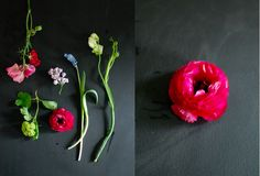 usually i photograph flowers on white, i'm loving this twist of using black chalkboard instead...