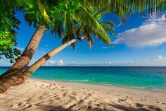 Sea Tropics Coast Beach Palma Horizon Nature