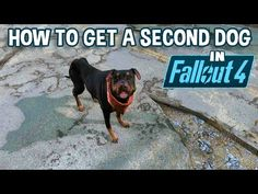 In this video, I'll show you how to get yourself another dog in Fallout 4 for one of your settlements, or just to have as a playmate for Dogmeat. Fallout 4 Secrets, Fallout 4 Tips, Fallout Facts, Fallout Game, Dogmeat Fallout, Fallout 4 Weapons, Video Game Memes, Video Games, Fallout 4 Settlement Ideas