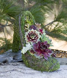 This classy Shoe is planted with with a mixture of colorful succulents. Shoe is a 10″ moss lined wire frame planted with beautiful succulents creating a  unique piece of art. This shoe requires very little care and will look beautiful for years. https://simplysucculents.com/shop/the-succulent-high-heel-pump/