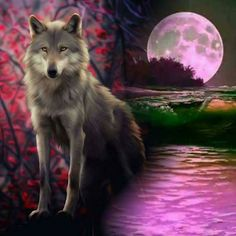 Wolf Images, Wolf Photos, Wolf Pictures, Art Pictures, Fox Fantasy, Wolf Name, Wolf Craft, Native American Spirituality, Wolf Husky