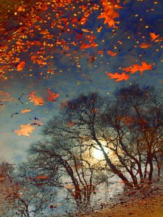 ~~The Magic Puddle ~ autumn, water reflection of trees with light shining through the branches and fallen leaves by Tara Turner~~