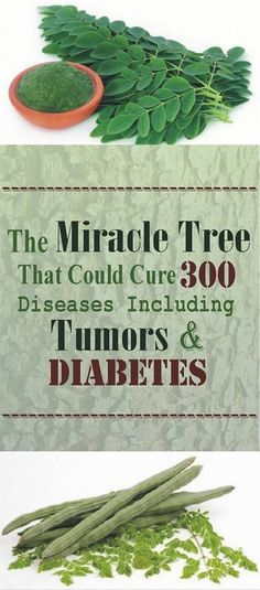 Repin This! This Miracle Tree That Could Cure 300 Diseases!!