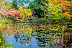 https://flic.kr/p/Cb8dn8 | Ōharano Shrine,Autumn Season of 2015 in Kyoto! | The Koisawa-no-ike Pond (鯉沢の池), which was modelled after the Sarusawa-no-ike Pond in Nara, is located in the precincts of the Ōharano Shrine (大原野神社) in Nishikyō-ku (西京区), Kyoto. There is a spring called Segai-no-Shimizu (瀬和井の清水). It is said that Ōtomo no Yakamochi (大伴 家持 - 718-785) liked drinking the water of this spring. It is said that in the vicinity of this spring many old poems were composed.