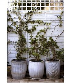 Espaliers: Fast growing vines planted in pots. via gardenista