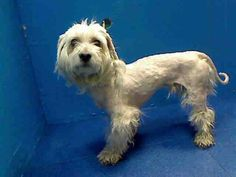 Brooklyn Center    JOE - A0984677    MALE, WHITE, MALTESE MIX, 3 yrs  STRAY - STRAY WAIT, NO HOLD  Reason STRAY   Intake condition NONE Intake Date 11/11/2013, From NY 11233, DueOut Date 11/14/2013,    Medical Behavior Evaluation BLUE  Medical Summary  Scan negative male. ~3yrs old mild gingivitis two healing wounds on right rear limb was nervous and tense during exam BARH NOSF   Weight 14.2   SAFER: NEW HOPE ONLY  Helper: 0984534