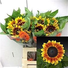 Sunflowers Flame (length 70 cm) add a pop of colour to your flower arrangements! They are great for a country rustic theme for your wedding or event! Head over to www.trianglenursery.co.uk to find out more information! Great wholesale prices!