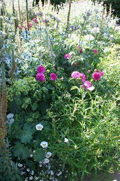 The McCarthy & Stone Garden Hampton Court Flower Show 2013