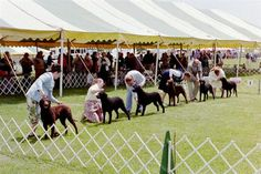 Chester Valley Kennel Club, not sure what year