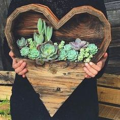 """2,113 Likes, 33 Comments - The Succulent Source (@thesucculentsource) on Instagram: """"Happy Valentine's Day!! ❤️ Pic: @knotandgrain #thesucculentsource #succulent #succulents"""""""