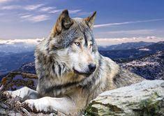 Волк: 14 тыс изображений найдено в Яндекс.Картинках