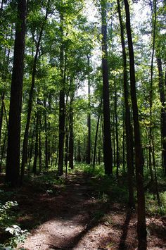 East Texas - East Texas Piney woods.