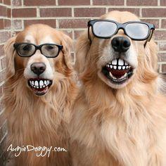 .Dental balls make great photo ops