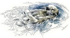 Sea Otter  wildlife art  nature print of by RobManciniImages