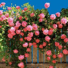 Egrow 100Pcs Planta decorativa Colorida Sementes de Flor Agrião de rocha - NewChic Móvel