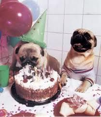 happy birthday to my pug buddy, hamilton!