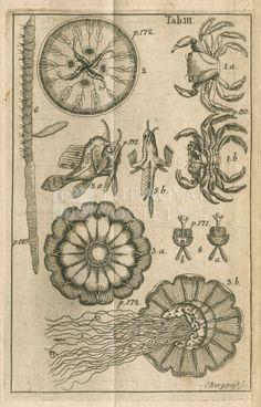 Fish, jellyfish and crabs