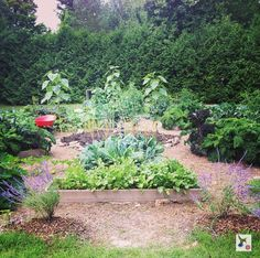 Build in the dream ... Creating a Mandala Garden of my own! Check it out: www.rawllygood.blogspot.ca  #allrawllygood #makeithappen #mandalagarden #therealignranch