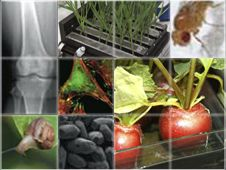 Space Life Sciences education website: resources on living organisms in the space environment