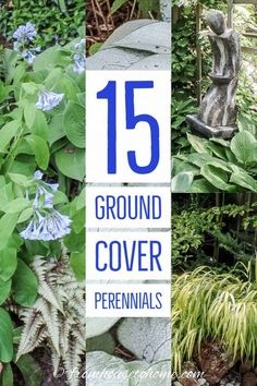 21 Stunning Perennial Ground Cover Plants That Thrive in the Shade - Gardening @ From House To Home 15 Stunning Perennials That Thrive in the Shade Perennials Fabric, Full Sun Perennials, Shade Perennials, Flowers Perennials, Dwarf Plants, Tall Plants, Shade Plants, Flowering Plants, Perennial Ground Cover