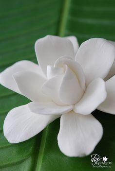 Oh I love Gardenias! Exotic Flowers, Tropical Flowers, My Flower, White Flowers, Beautiful Flowers, Gardenias, Gardenia Bush, Gardenia Wedding, Amazing Gardens