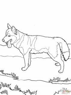 Siberian Husky Coloring Page Hd Wallpaper Id 58737 Uncategorized