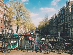 Bikes and a colorful day in Amsterdam - The cat, you and us