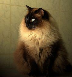 cat Salome
