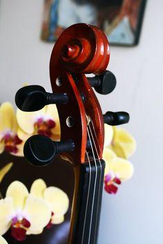 Clavijas de Violín Strunal Rojo