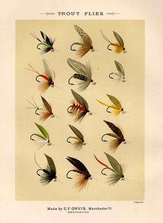 trout flies glorious fly fishing print no. 1. $12.50, via Etsy. @Brian Flanagan Flanagan Johnson would like this