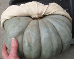How to make a mold for making your own concrete pumpkins---I want one NOW