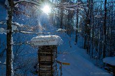 Winter wonderland in Mother Nature, Winter Wonderland, Switzerland, Backdrops, Snow, Outdoor, Europe, Mists, Viajes