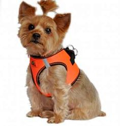 2ab4d743723356c7696f7a0eef8e5e8e orange tops stitches 45 best dog harness & no pull dog harness images on pinterest dog