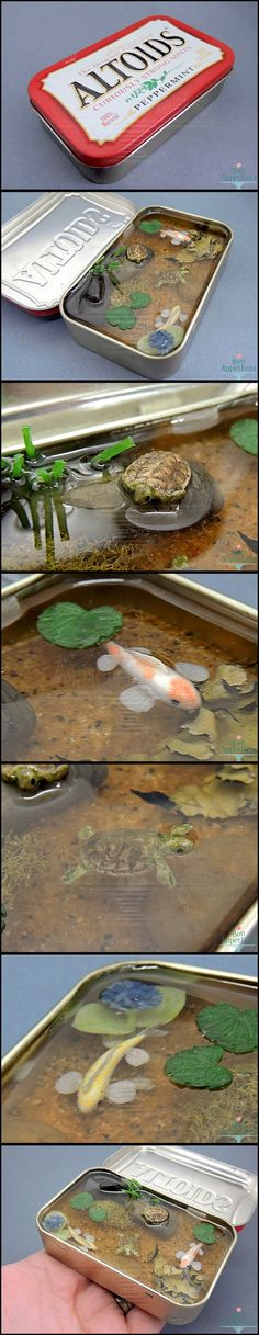 THIS IS EXCEPTIONAL!!! :) x Miniature Koi and Turtle Altoids Pond by Bon-AppetEats on DeviantArt. This one has a natural sand substrate, natural stones, moss for underwater plants, a small flower, handmade lily pads, two koi fish (one orange and white, one yellow and white), and two turtles (one swimming, one hiding in its shell on the rock).