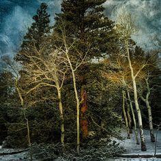 naked aspens, snow, and bristlecone pines#nationalpark #landscape #neveda #traveling #landscape_lovers #greatbasin #usinterior #californiacenterfordigitalarts #bobkillenarts #art #artteacher #travel #sunrise #photoshopteacher #artphotography