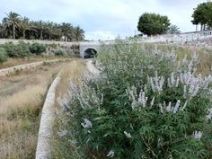 Otoño (Menorca)