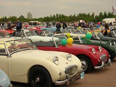 Big Day Out, Days Out, Frog Eye, Austin Healey, Cars And Motorcycles, Antique Cars, Sports, Photography, Vintage Cars