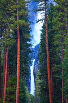 Yosemite Falls And Ponderosa Pines by Gavin Emmons, via Flickr