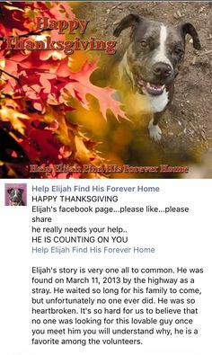 11/27/16 PLEASE DON'T FORGET ABOUT ELIJAH! HE'S WAITED 3 YEARS!! HE COUNTS ON US! HE NEEDS A LOVING HOME NOW! /ij https://m.facebook.com/story.php?story_fbid=1095487163896961&substory_index=0&id=912668925512120&__tn__=%2As