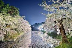 東京カメラ部 Editor's Choice:Sho Shibata