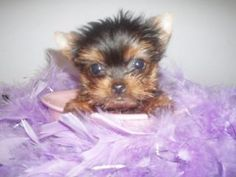 This is what Zo Zo looked like when she was brought home.