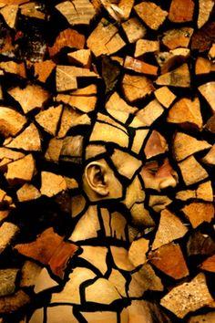 What initially looks like a pile of chopped logs is an example of world champion body-painter Johannes Stötter's work. He renders his models invisible by merging them into the background scenery. Photograph: Johannes Stötter/Barcroft Media
